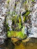 在岩石的青苔 图库摄影