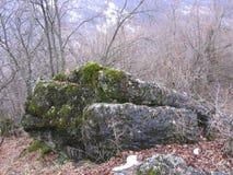 在岩石的青苔 免版税库存图片