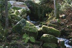 在岩石的青苔 库存照片