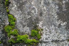 在岩石的青苔 ?? 免版税库存图片
