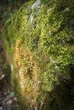 在岩石的青苔 免版税图库摄影