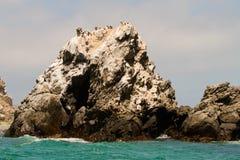 在岩石的鸟 免版税图库摄影