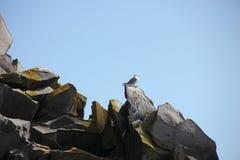 在岩石的鸟 库存图片