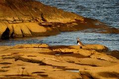 在岩石的鸟 免版税库存图片