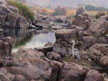 在岩石的鸟 免版税库存照片