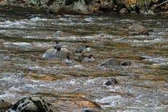 在岩石的鸭子 免版税库存图片