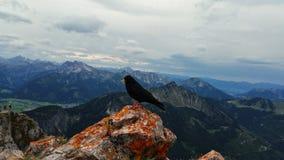 在岩石的黑鹂栖息处 库存图片