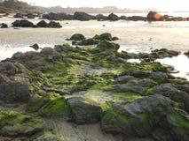 在岩石的绿叶, Redi海滩 图库摄影