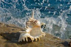 在岩石的贝壳与飞溅 免版税图库摄影
