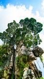 在岩石的结构树 库存图片