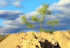 在岩石的结构树 免版税库存图片