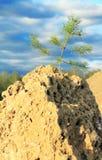在岩石的结构树 库存照片