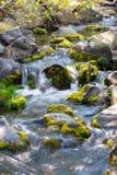 在岩石的水流量在小河 免版税库存图片