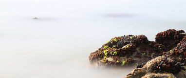 在岩石的黑淡菜从几乎虚幻的雾涌现 库存图片