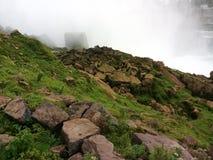 在岩石的绿色青苔在尼亚加拉瀑布 免版税库存图片