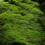 在岩石的绿色青苔 免版税库存图片