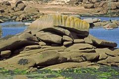 在岩石的ploumanach附近的布里坦尼海岸线法 库存照片