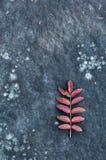 在岩石纹理和背景的红色叶子 免版税库存图片