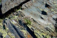 在岩石纹理的花与好细节 库存照片