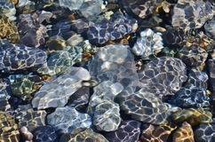 在岩石背景的水母在水中 免版税库存图片