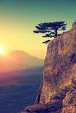 在岩石边缘的单独杉树 免版税图库摄影