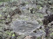 在岩石面孔纹理的地衣 库存图片