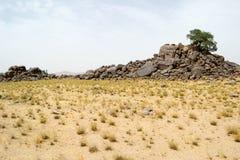 在岩石顶部山的偏僻的树在沙漠#3 免版税库存照片