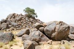 在岩石顶部山的偏僻的树在沙漠#2 免版税库存图片