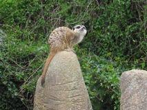 在岩石顶部的小动物开会 库存照片