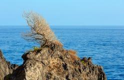 在岩石顶面近的夏天海的偏僻的凋枯的树 库存图片