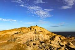 在岩石登上上面的海狮在蓝天下在Cabo Polonio,乌拉圭 免版税图库摄影