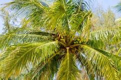 在岸的一棵棕榈树 库存照片