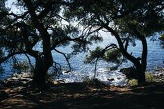在岸的两棵杉木以精采蓝色海为背景 库存图片
