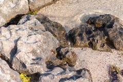 在岸的岩石 库存照片
