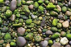 在岸的岩石 免版税图库摄影