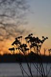 在岸的日落时间 免版税库存照片