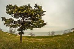 在岸的树 库存照片