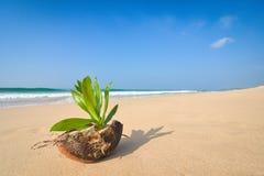 在岸的椰树 库存图片