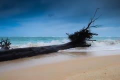 在岸的死的大树与与强的波浪和强风的风暴 免版税图库摄影