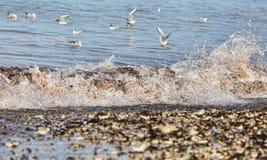 在岸的波浪 图库摄影