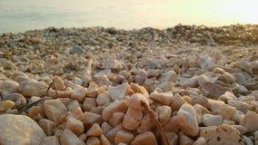 在岸的海岩石在晚上 免版税库存照片
