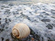 在岸的海snale 免版税库存图片