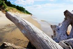 在岸的漂流木头在背景中与hu的一个沙滩 免版税图库摄影