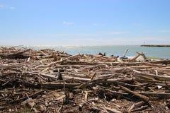 在岸的漂流木头 在这个区域Delta del Po,意大利 图库摄影
