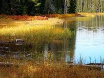 在岸的精采秋天颜色 免版税库存照片
