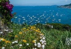 在岸的花反对海和小船 图库摄影