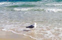 在岸的鸟 免版税库存照片