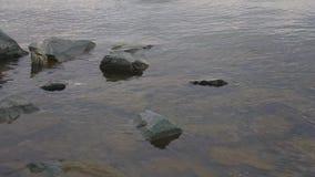 在岸的水洗涤的石头 股票视频