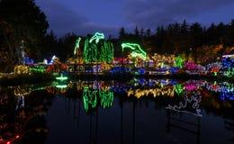 在岸英亩的圣诞灯 库存图片