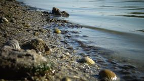 在岸边缘的小龙虾Gammarus在水` s边缘在出海口 Tiligul Liman 影视素材
